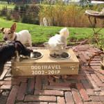 Dogtravel 15 jaar jubileum in 2017