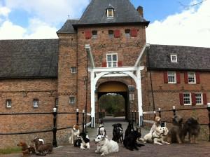 Kasteelhonden
